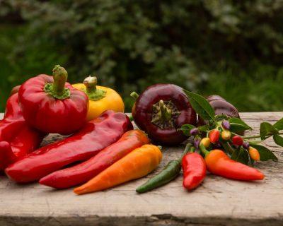 A mezőgazdasági sokféleségről – bevezető kurzus